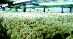 菌类养殖加湿